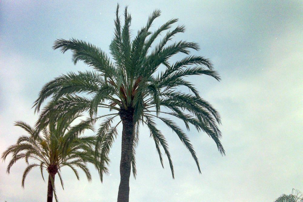 Marbella-4